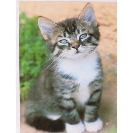 Number painting set Kitten