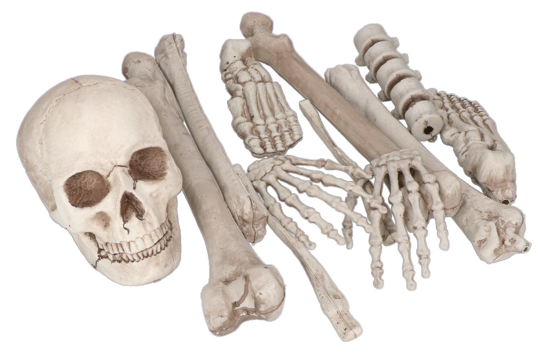 Skelet botten set 12 delig 4t Moment