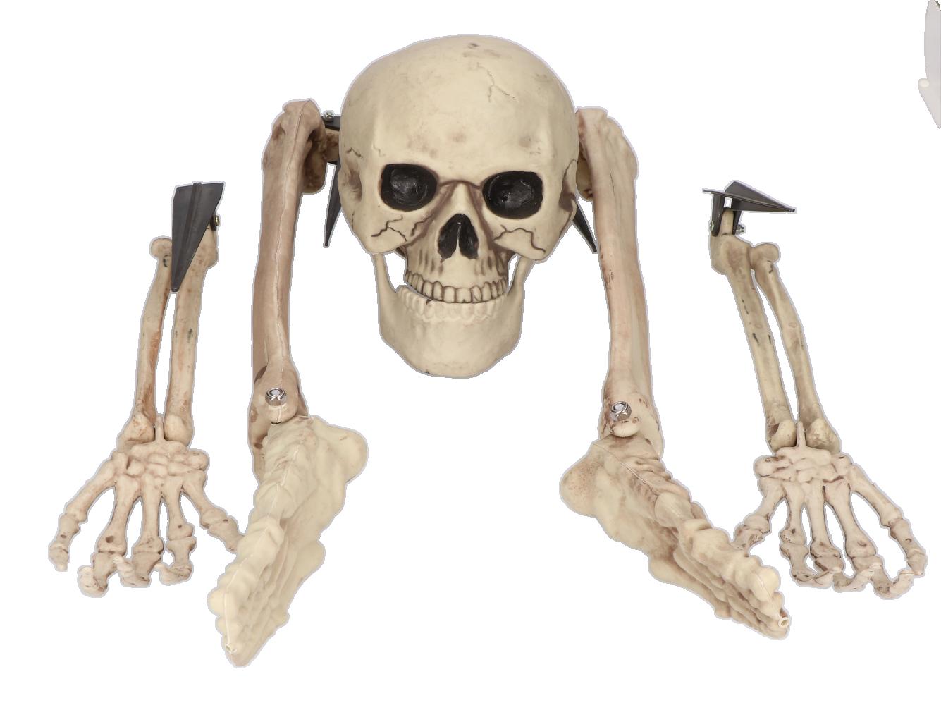 Skelet botten set 5 delig